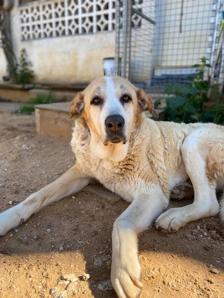 Canis Thor(Gedeeltelijke adoptie) Thor16