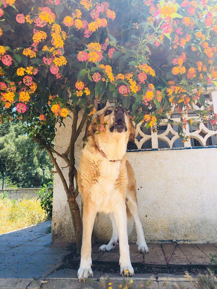 Canis Thor(Gedeeltelijke adoptie) Thor18