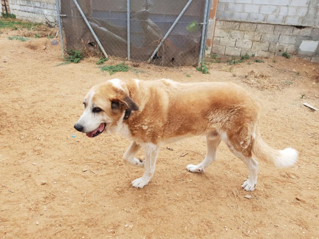 Canis Thor(Gedeeltelijke adoptie) Thor19