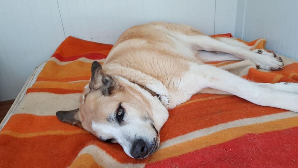 Canis Thor(Gedeeltelijke adoptie) Thor210