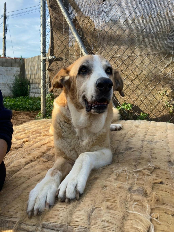 Canis Thor(Gedeeltelijke adoptie) Thor218