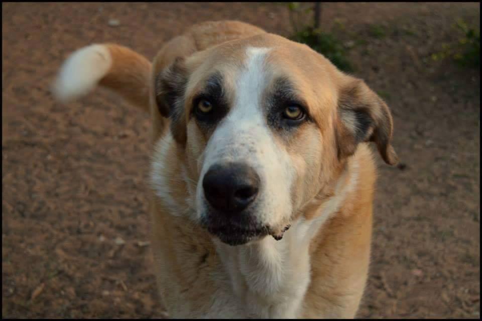 Canis Thor(Gedeeltelijke adoptie) Thor313
