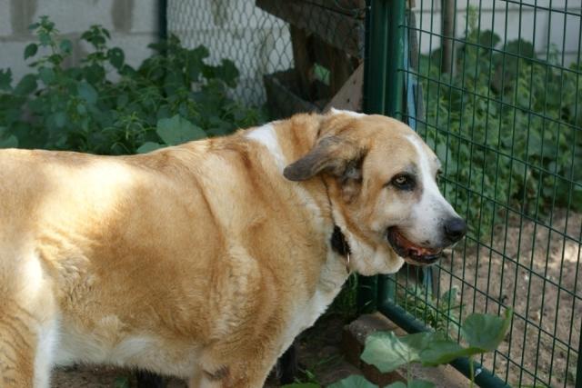 Canis Thor(Gedeeltelijke adoptie) Thor410