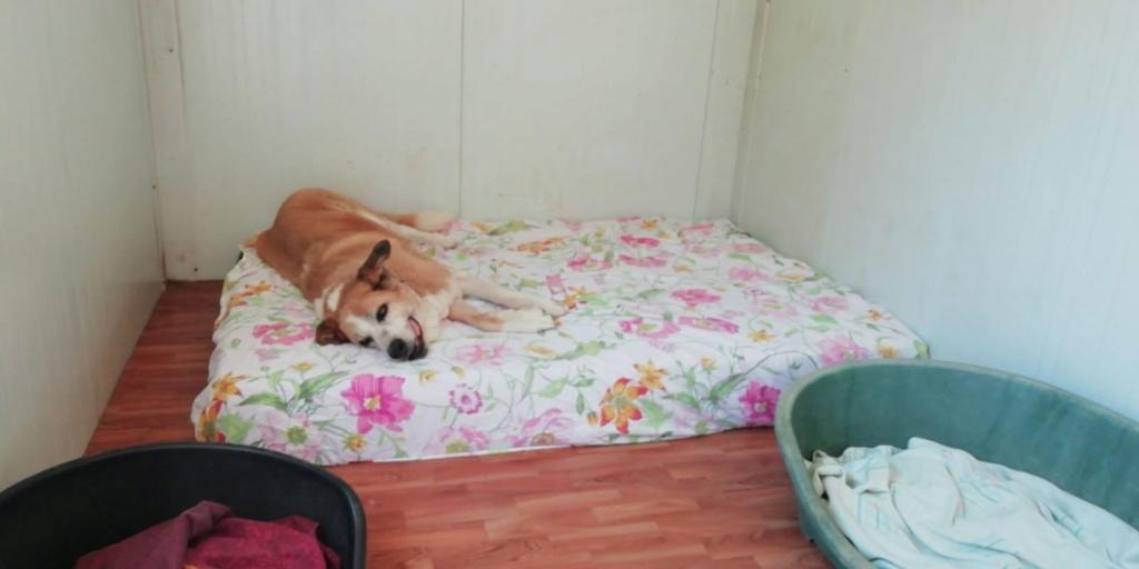 Canis Thor(Gedeeltelijke adoptie) Thor_b10