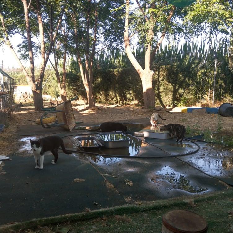 Ook dit jaar een waterbed voor de katten Warm10