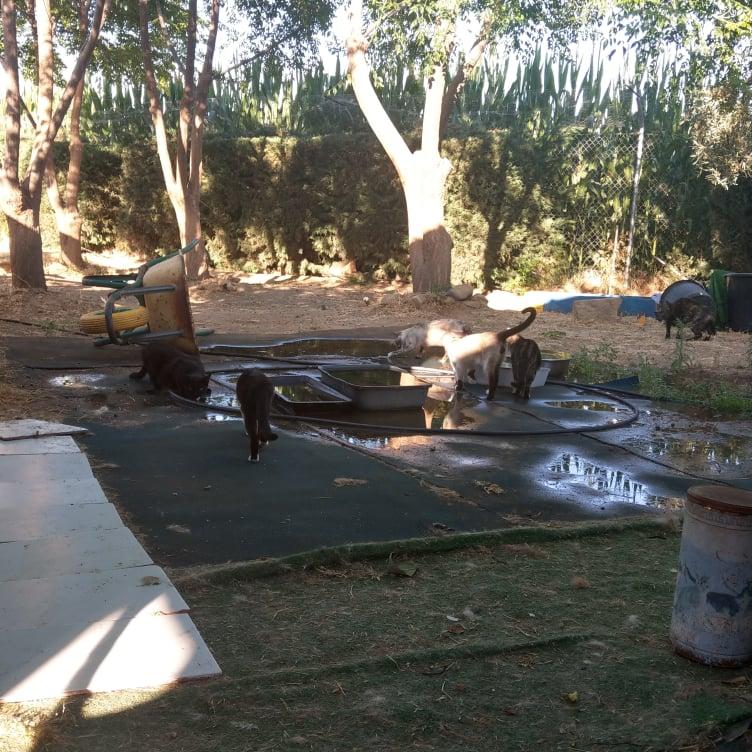 Ook dit jaar een waterbed voor de katten Warm110