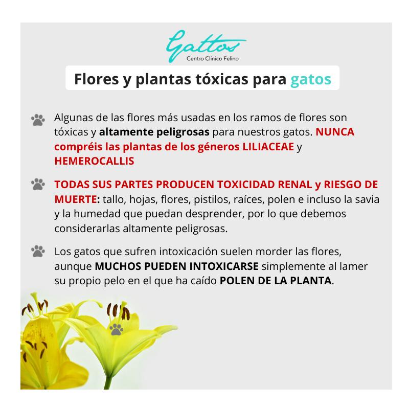 Plantas/flores tóxicas para gatos 111