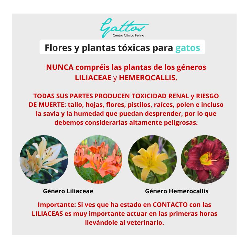 Plantas/flores tóxicas para gatos 211