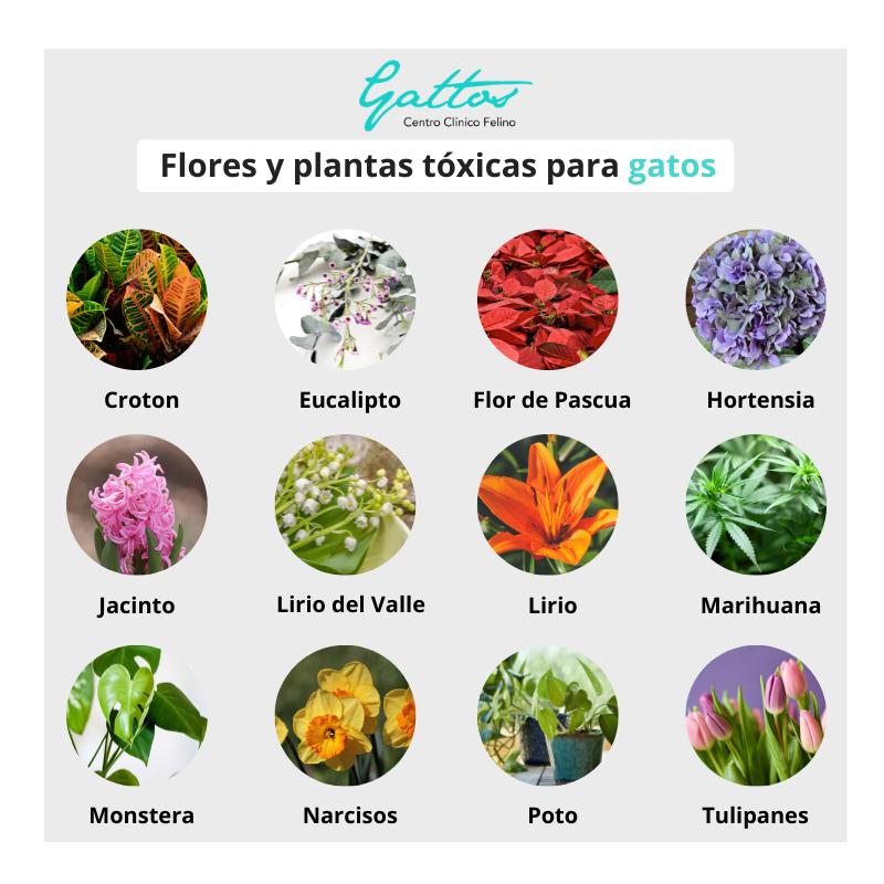 Plantas/flores tóxicas para gatos 510