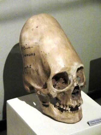 REPTILIANOS EN LA HISTORIA  SEGUN  ALEXANDER KOLTYPIN Y OTROS. Skull-10