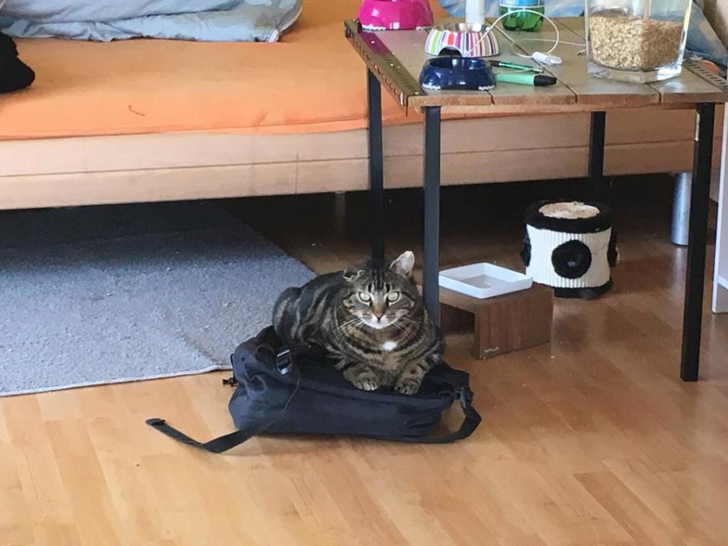 Chéri, chat semi sauvage perdu.. Cheri210
