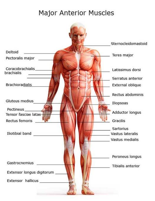 Robert Gapf vs Marcio Abreu Muscle10