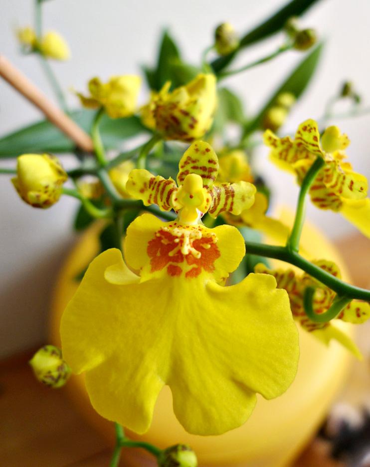 Orchideen 3 (fortlaufende Seiten 300 bis 400) - Seite 31 Orchid10