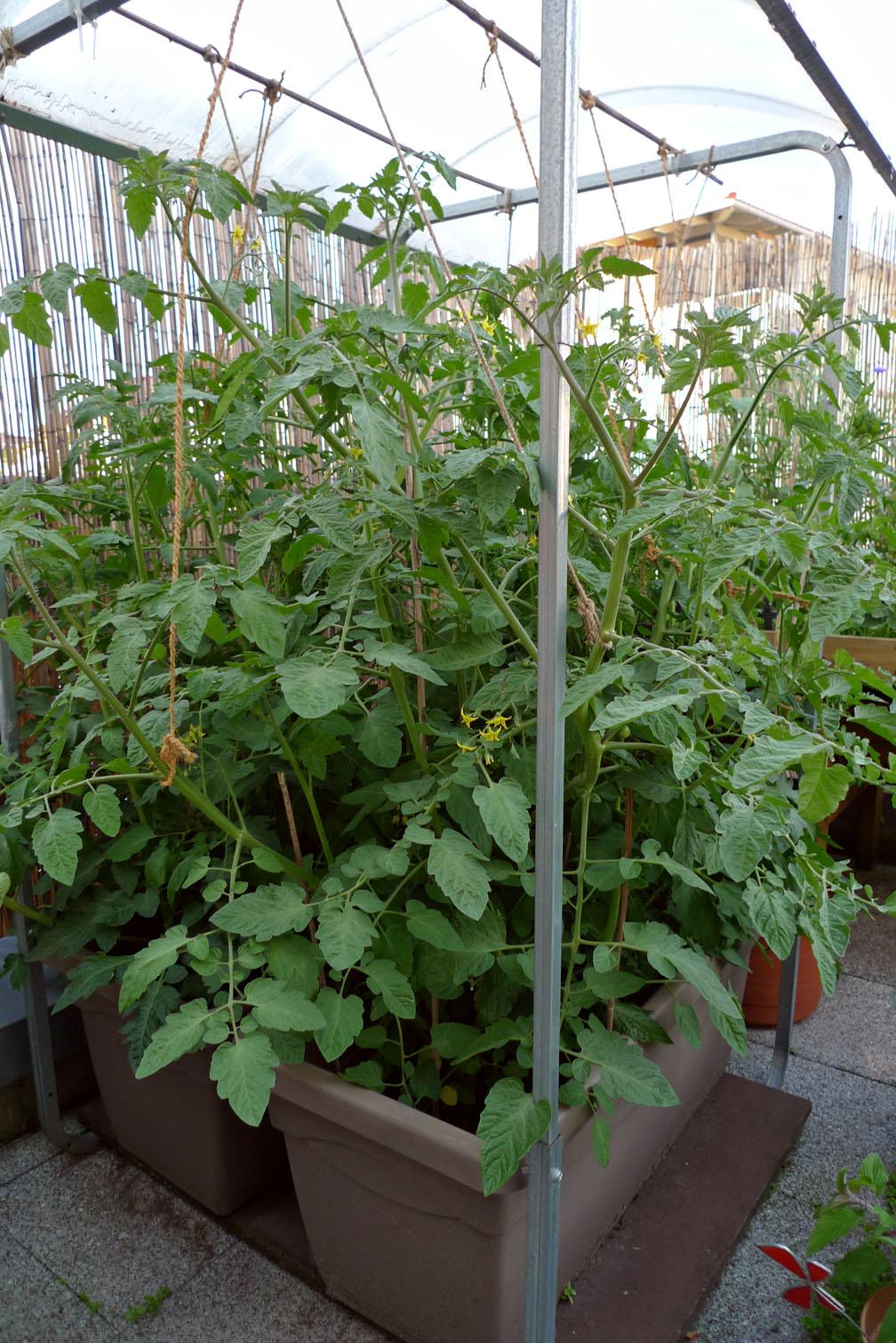 Dachterrasse von Spike-Girl Tomate10