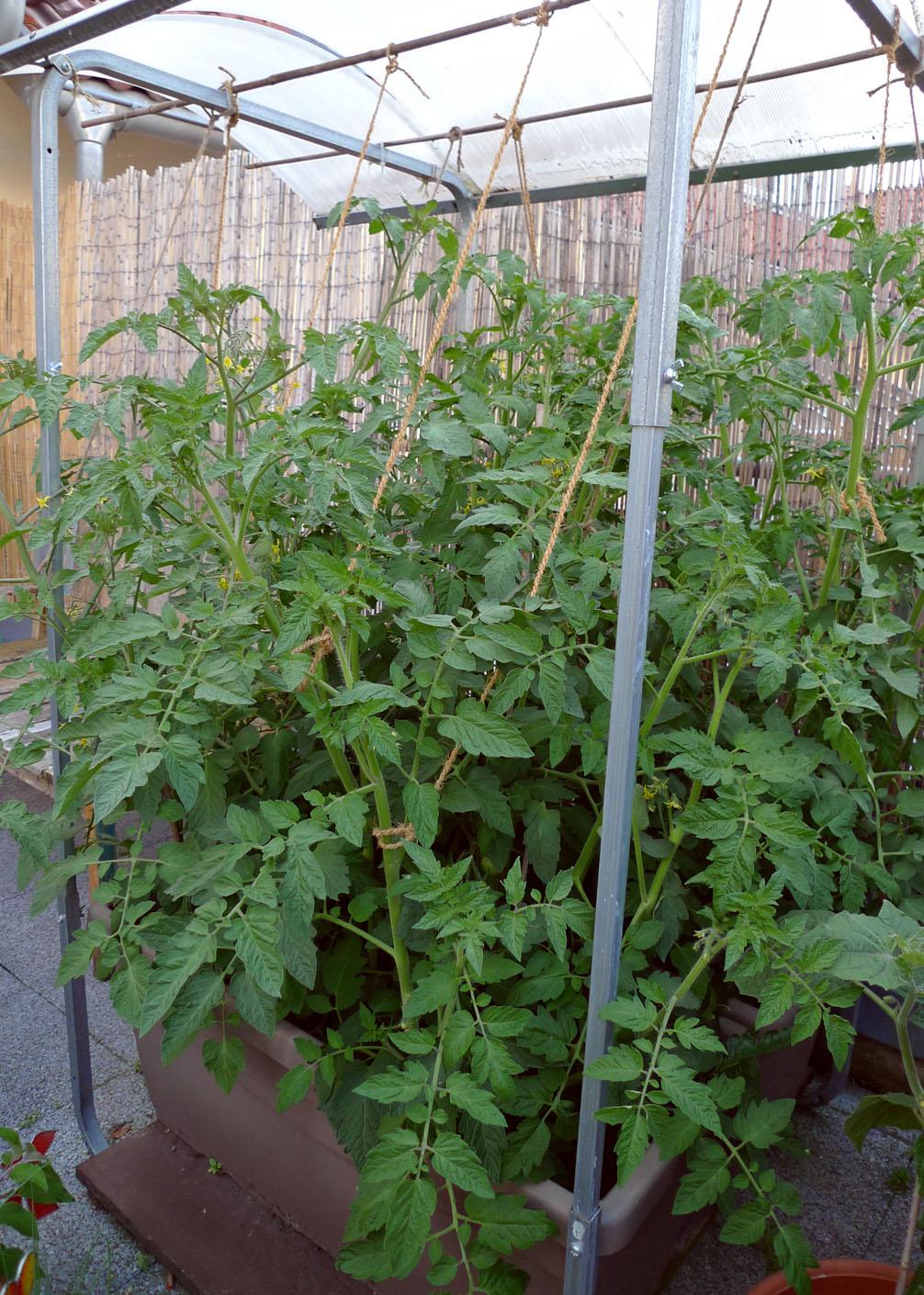 Dachterrasse von Spike-Girl Tomate11