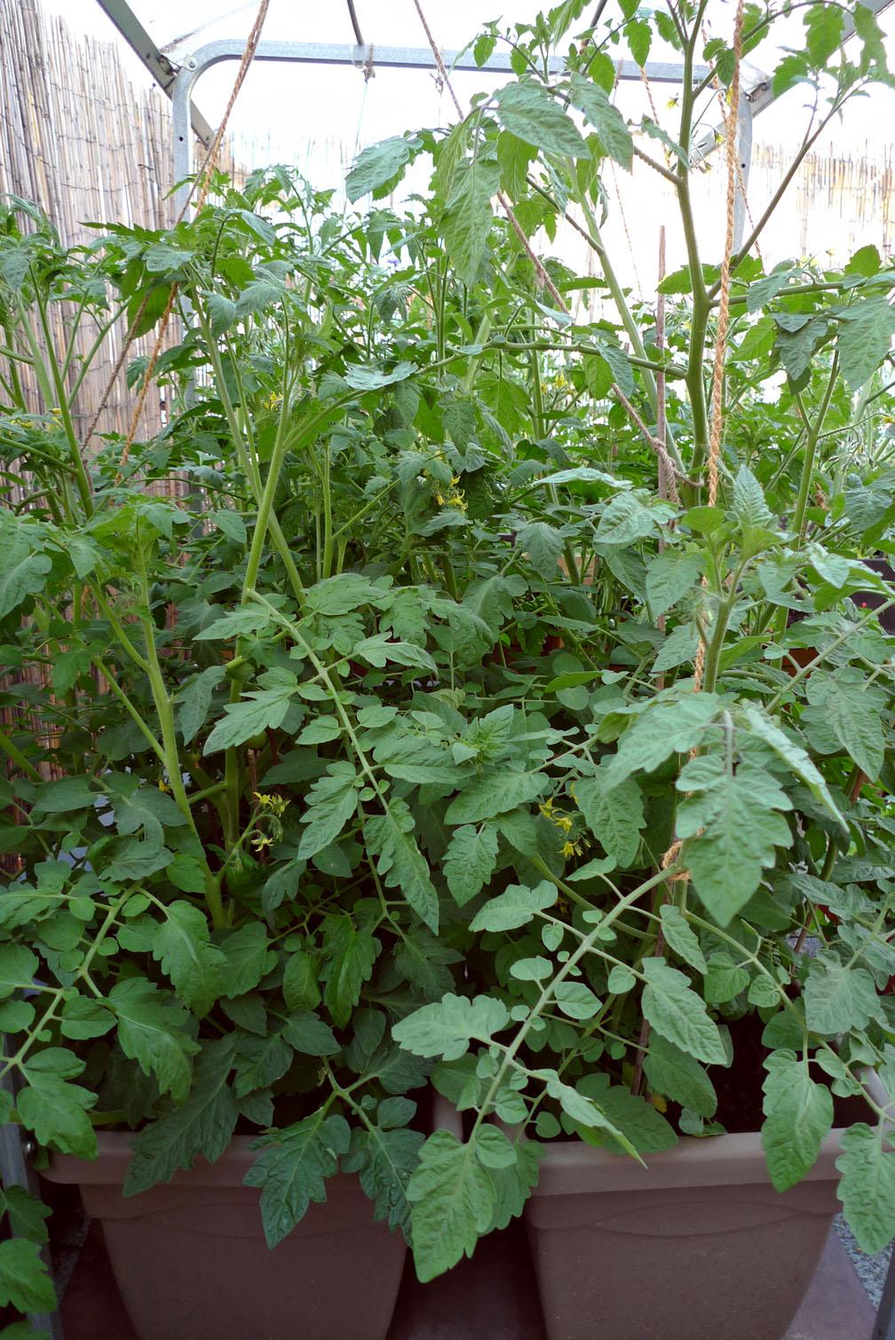 Dachterrasse von Spike-Girl Tomate12