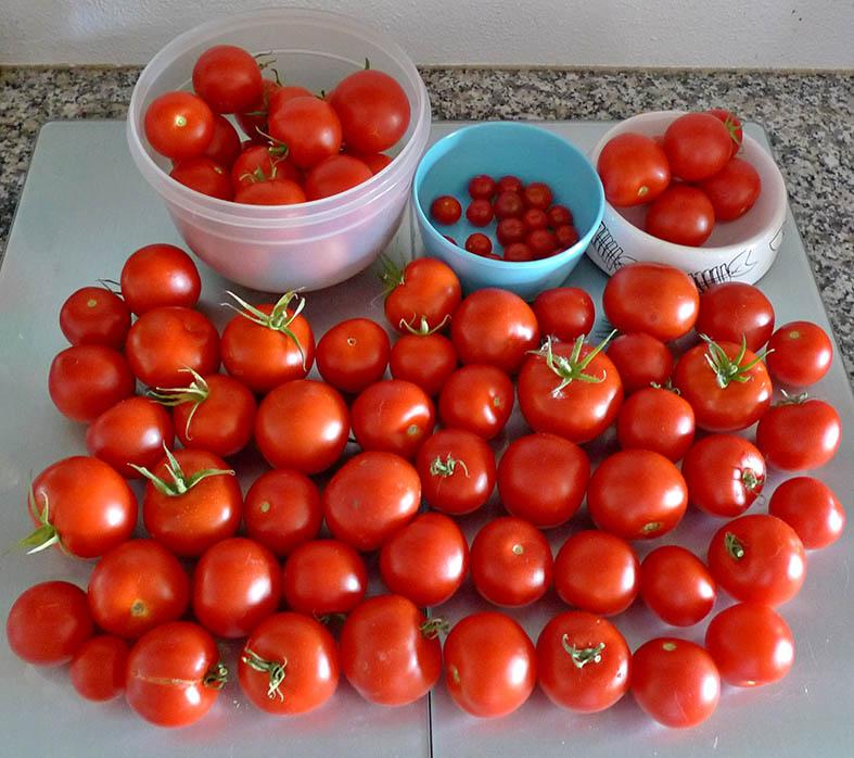 Unser erstes Gemüsebeet - Seite 19 Tomate35
