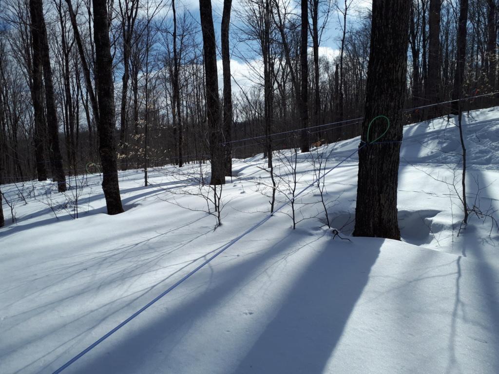 Beauté de neige et quantité 2019 20190213