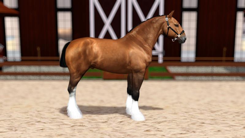 Регистрация лошадей в RHF 2 - Страница 8 Screen15