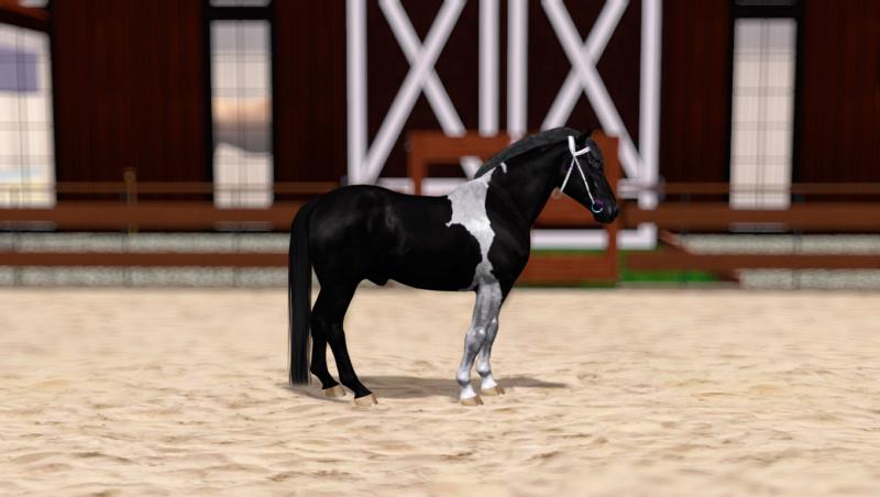 Регистрация лошадей в RHF 2 - Страница 8 Screen18