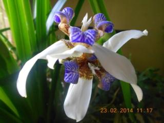 Отдам цветы и отростки - Страница 30 F_216010