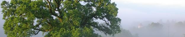Le Chêne de la Paix