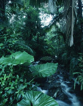 Zicha (Corwin) Jungle10