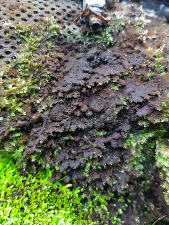 Problème Algues HELP 20180712