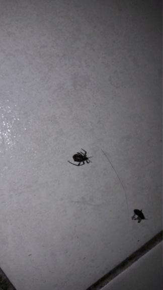 [Aphididae] Quel est cet insecte? 20181212