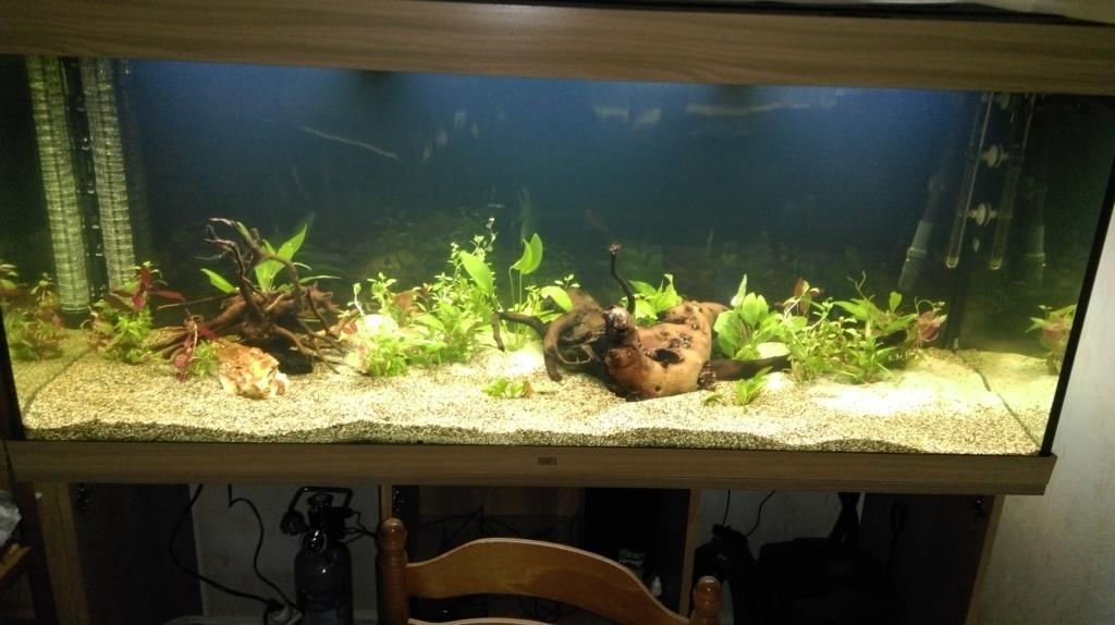 aquarium RIO 450 installé depuis septembre 2018 Imag0514