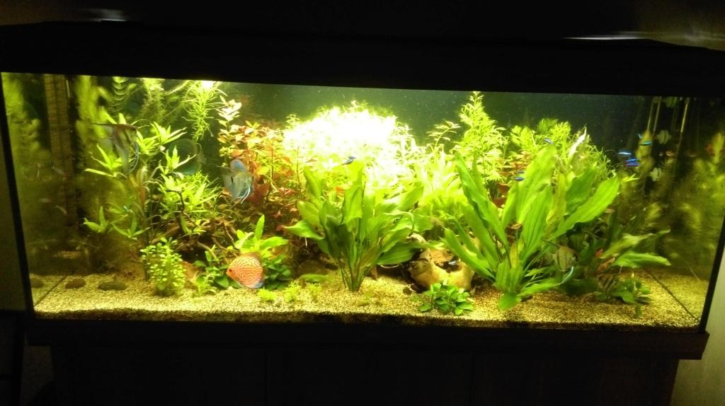 aquarium RIO 450 installé depuis septembre 2018 Imag0515