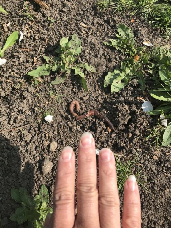 First garden in Alberta 06194710