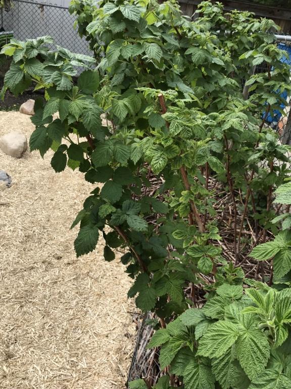 First garden in Alberta D4be1010
