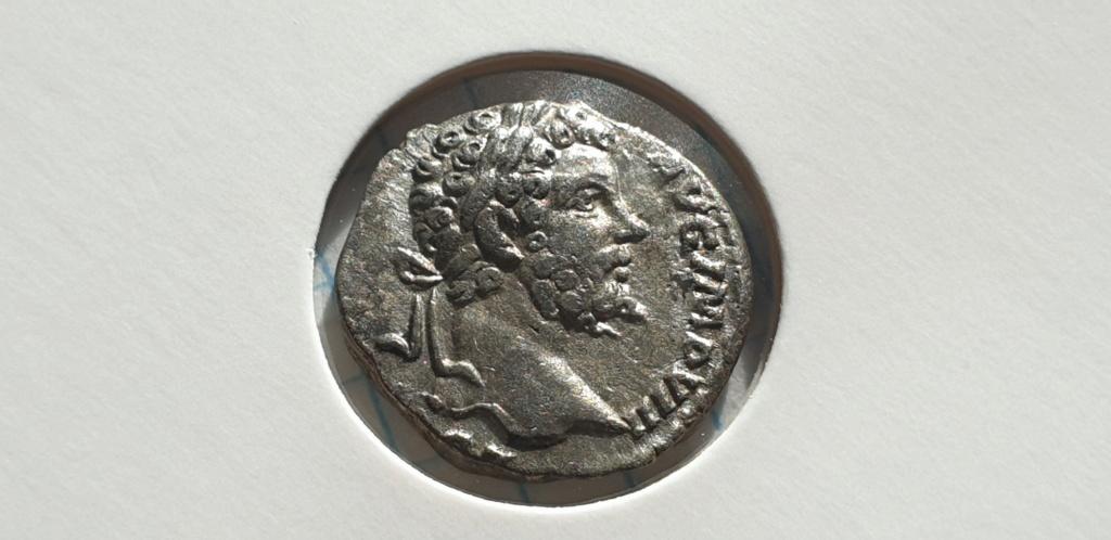 Denario de Septimio Severo. PROVIDENTIA AVG. Laodicea ad Mare 2019-014