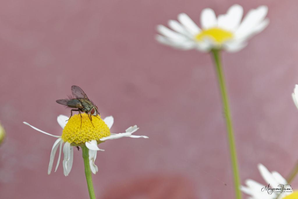 Photographein le club photo en ligne - Portail* Insect12
