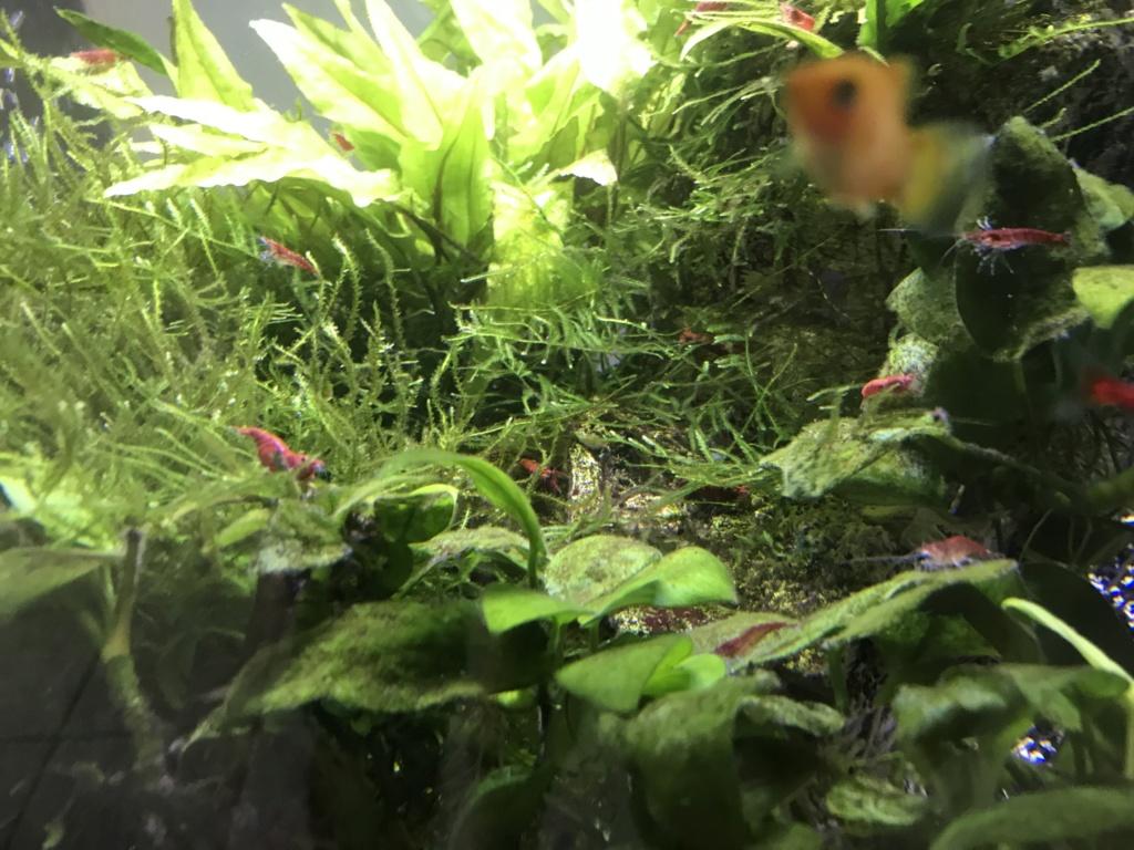 Petit soucis de crevettes Img-4511