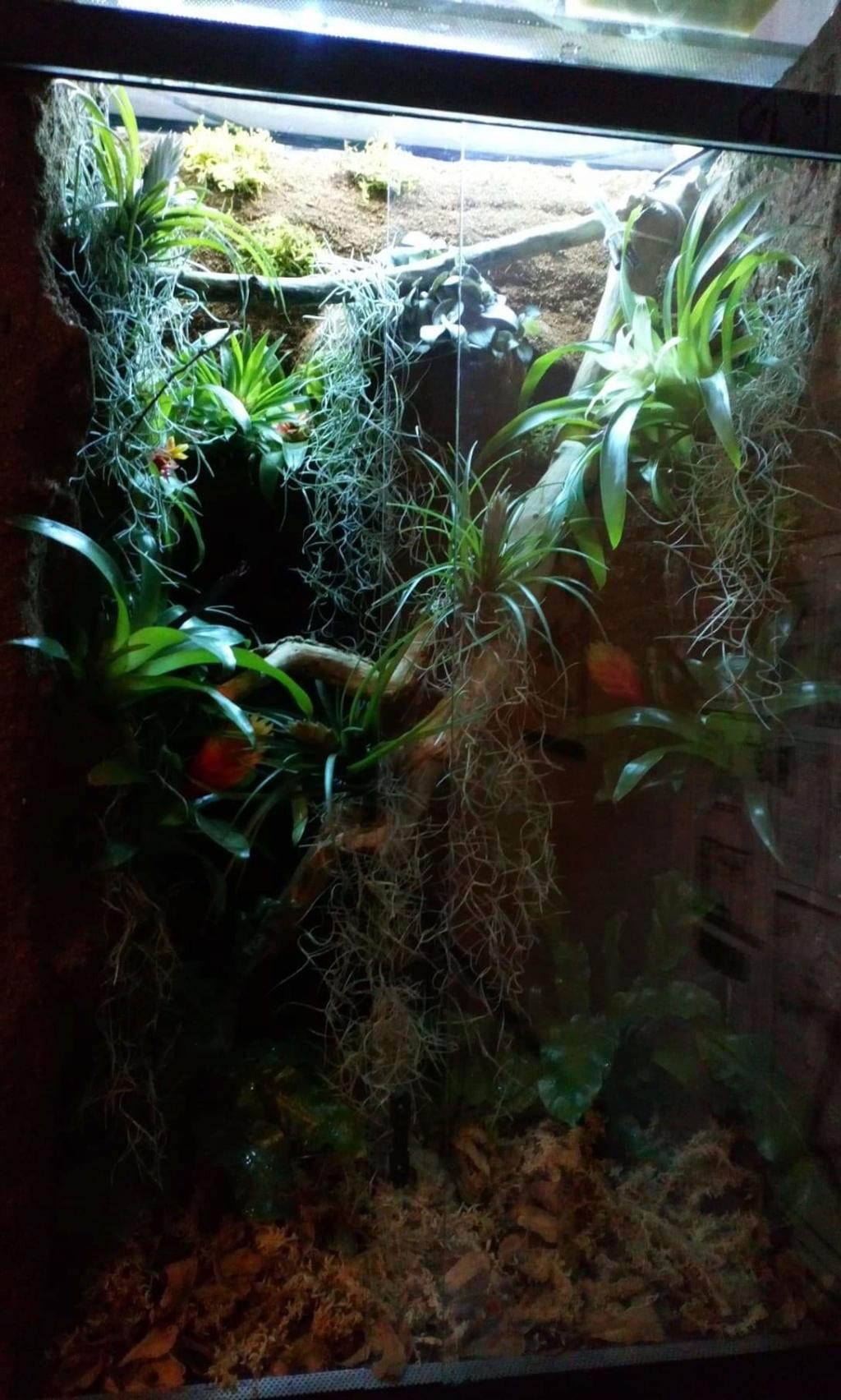 Chauffer un terrarium tropical arboricole de 1m de haut  Receiv10