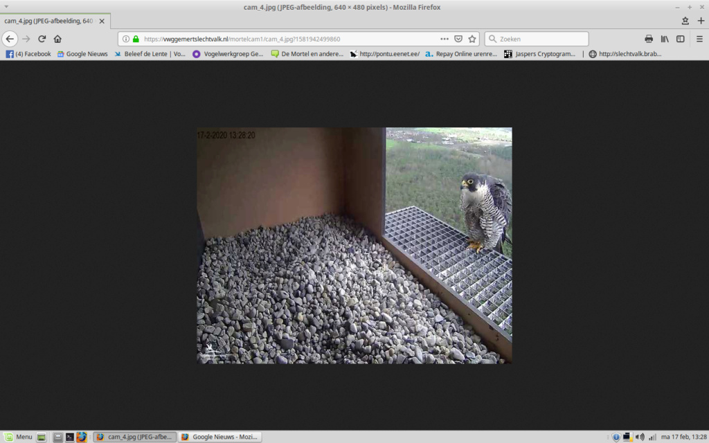 Afbeeldingen De Mortel 2020 deel 1. Vanaf 6-01-2020 - Pagina 24 Screen10