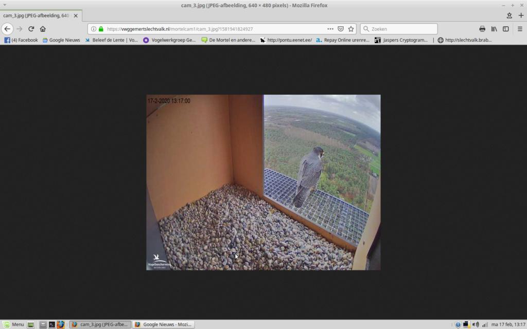 Afbeeldingen De Mortel 2020 deel 1. Vanaf 6-01-2020 - Pagina 24 Screen12
