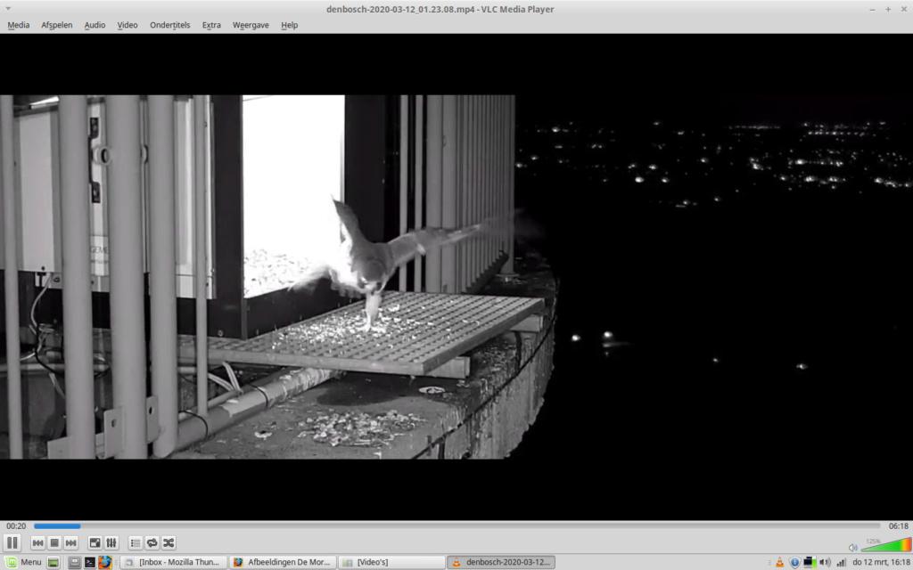 Afbeeldingen De Mortel 2020 deel 1 vanaf 1 maart 2020 - Pagina 10 Screen46