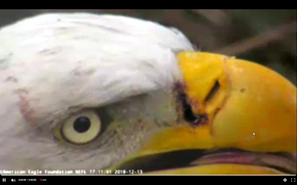 Diverse Eagle cams. - Pagina 23 Screen58