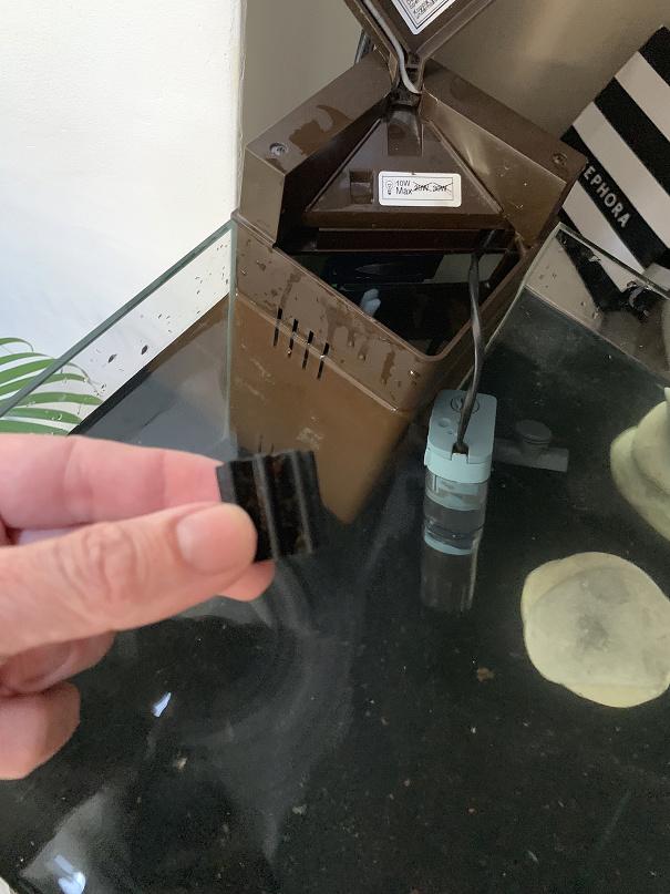 Remise en eau d'un aquarium - ou mets je cette molette ? Img_6211
