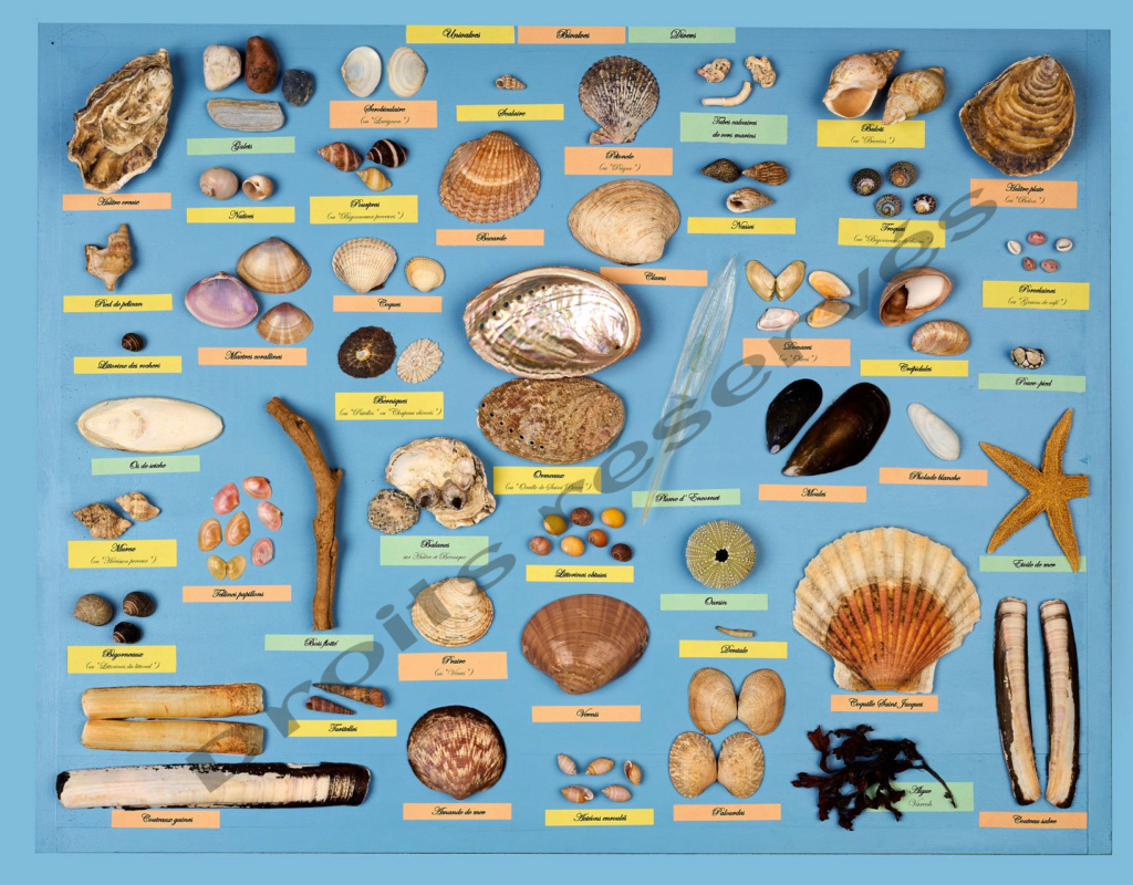 Poster Tableau Coquillages !! Tablea11