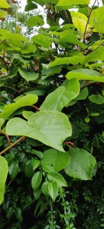 Quelle est cette plantes?  Img_2010