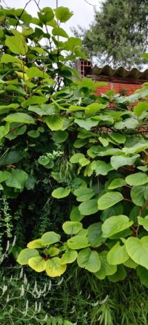 Quelle est cette plantes?  Img_2011