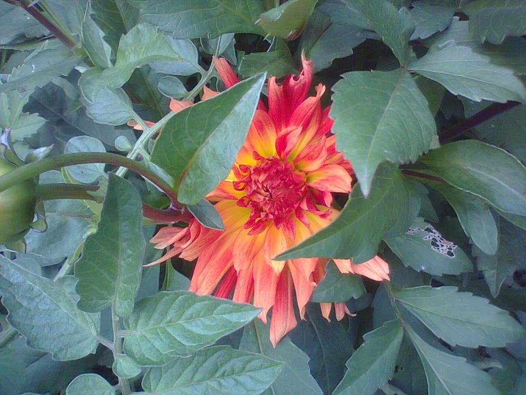 5 juillet : une ou des fleurs 25_9_210