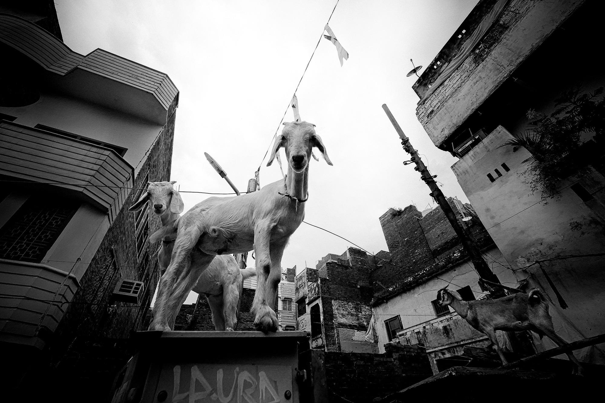 Balade dans les ruelles de Varanasi 010_p110