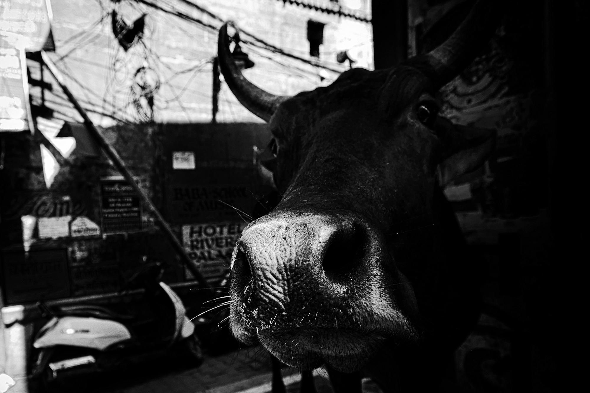 Balade dans les ruelles de Varanasi 017_p110