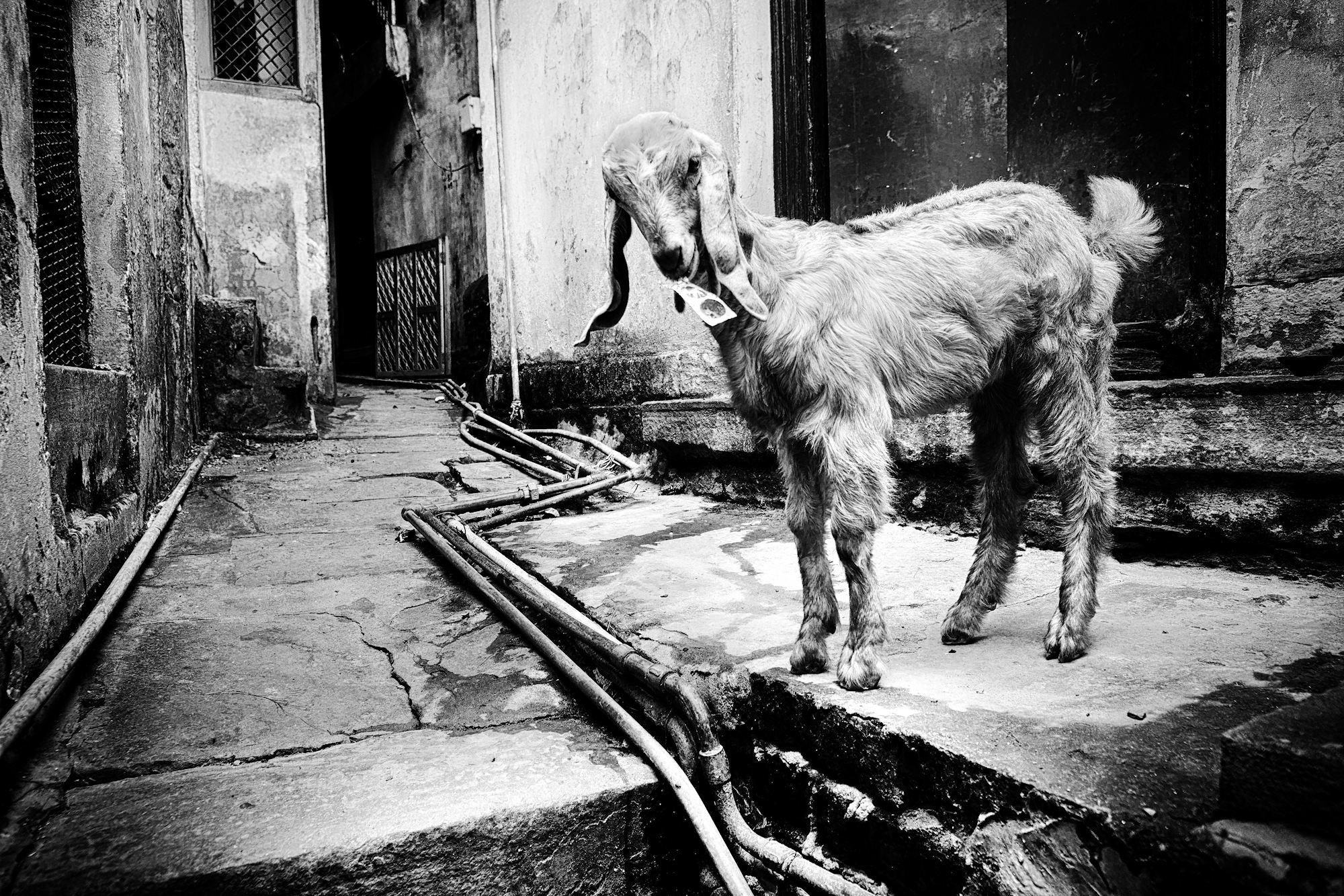 Balade dans les ruelles de Varanasi 020_p110