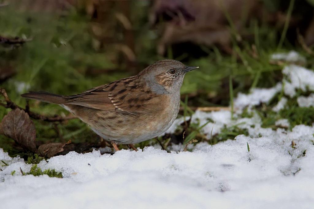 [Animaux] Oiseaux _68a8610